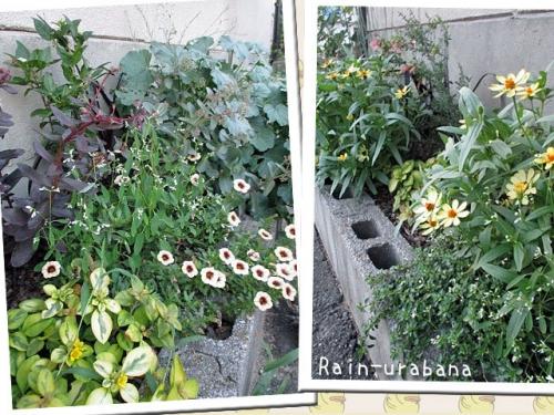 お花屋さんの花壇♪