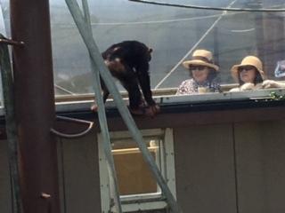1旭山動物園