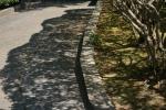 3.木の陰-01D 1705q