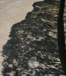 4.木の陰-02D 1705qt