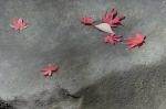 3.芝公園:もみじ谷:岩と落葉-07D 1612qt