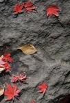4.芝公園:もみじ谷:岩と落葉-05D 1612qt
