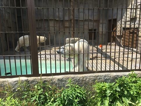 円山白熊さん