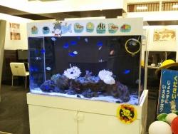 珊瑚礁のお魚さん~フジグランにて20170711