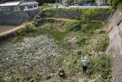 池回りの雑木を市が伐採a