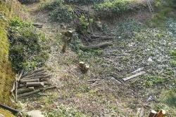 池回りの雑木を市が伐採b