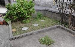 花壇の草取り20170920-1