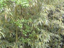 裏の雑木や竹