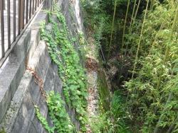石崖の苔-2