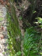 石崖の苔-1