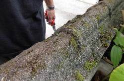 苔はまだ少ないコンクリート塀のトップ