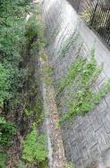 裏の池回り~お隣さん側-1