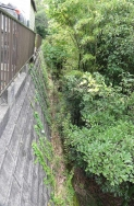 裏の池回り~お隣さん側-2