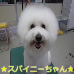 IMG_0004 (5)