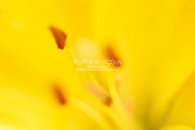 IMG_9202-3.jpg