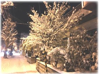 帰り道の重そうな木