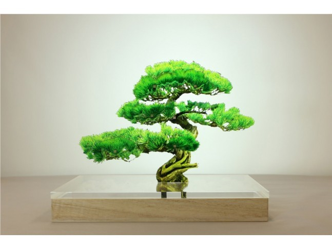 bonsai_1_mini.jpg
