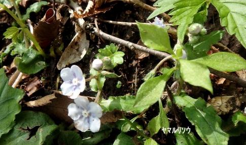 松山城皿が嶺 035-002
