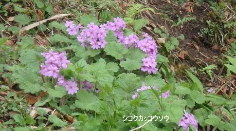 松山城皿が嶺 037-002