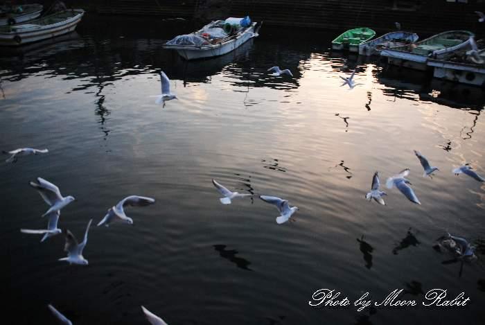 漁港の鴎(カモメ) 西条漁港 愛媛県西条市北浜