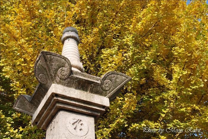 前神寺の銀杏 愛媛県西条市洲之内