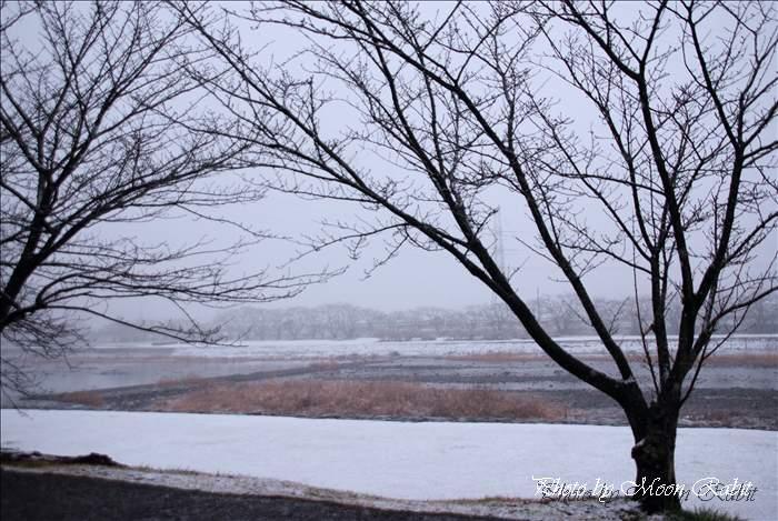 雪の武丈公園の桜木 愛媛県西条市福武