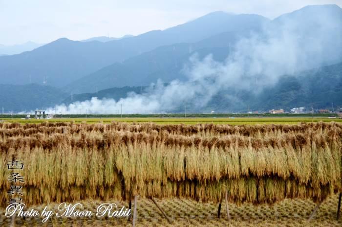 稲木と野焼き 愛媛県西条市氷見