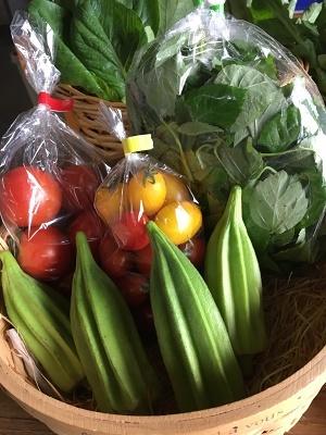 9月野菜セットアップ1