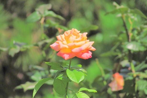 flower170903-101.jpg