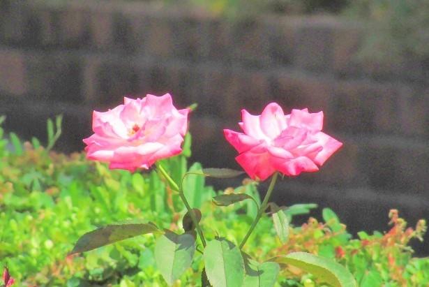 flower170903-102.jpg