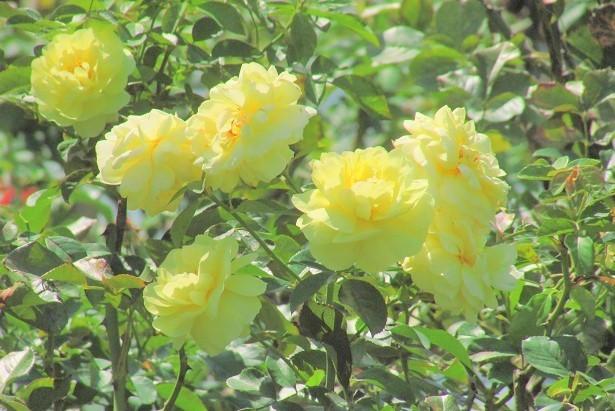 flower170903-103.jpg