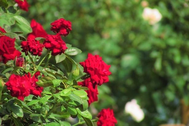 flower170903-104.jpg