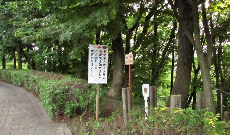 itibazaka170806-106.jpg