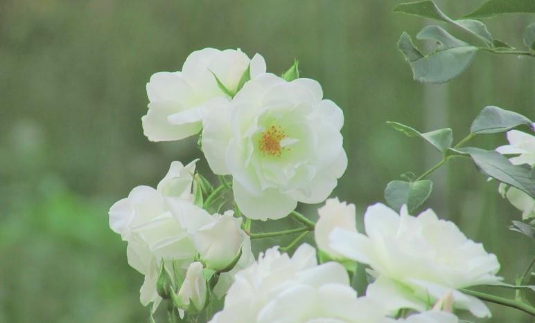 mizumoto170520-120.jpg