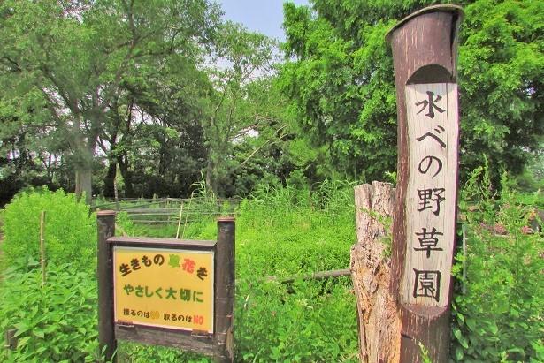 mizumoto170610-139.jpg