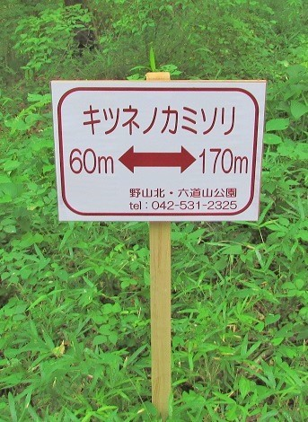 noyamakita170806-112.jpg