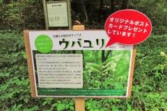 noyamakita170806-205.jpg
