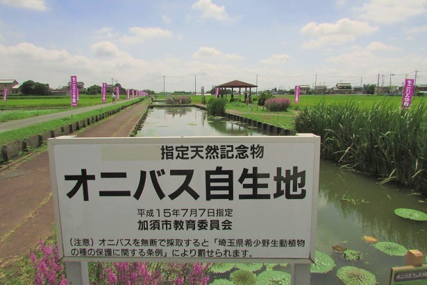onibasu170812-106.jpg