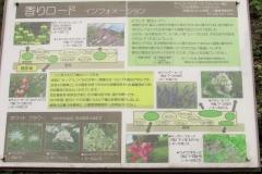 oomiyadaini170625-201.jpg