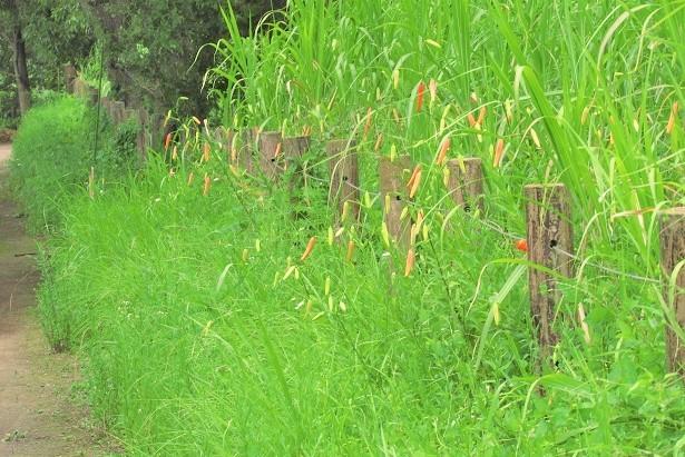 sakurasou170717-102.jpg