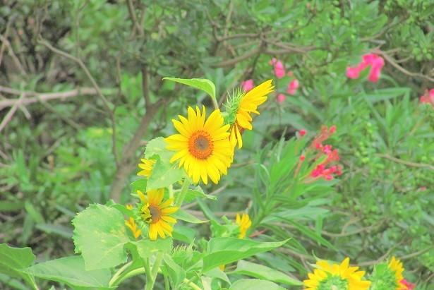 sakurasou170717-119.jpg