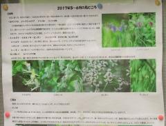 shakujii170618-201.jpg