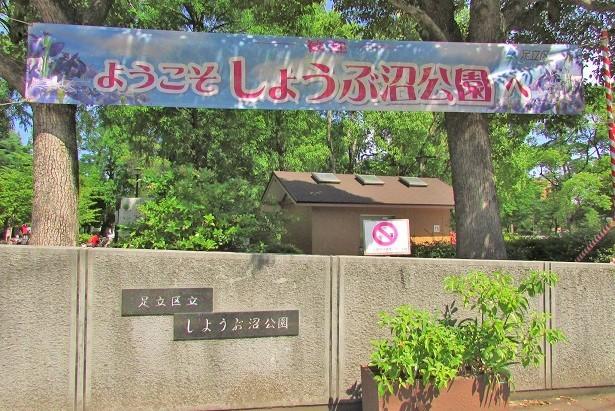 shoubunuma170617-103.jpg