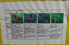 shoubunuma170617-201.jpg