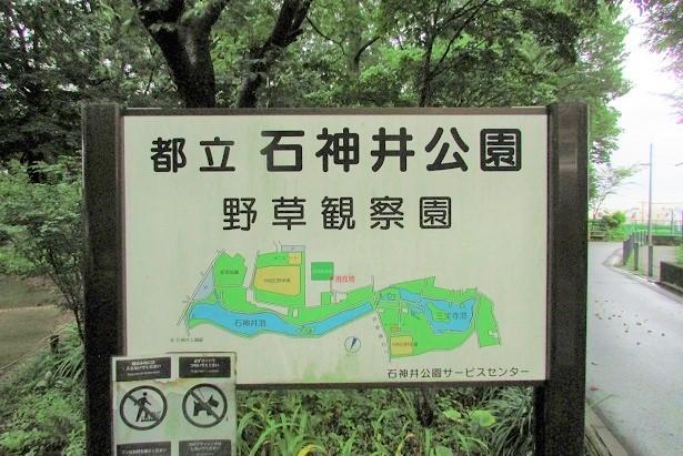 syakujii170814-111.jpg