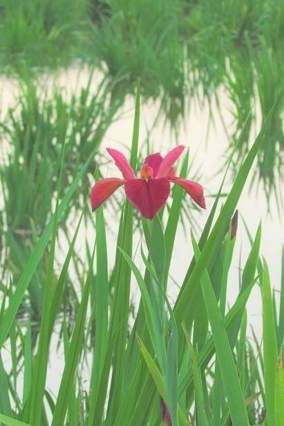 yashiominami170520-102.jpg