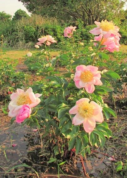 yashiominami170520-104.jpg