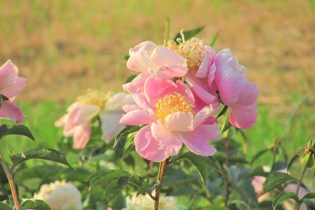 yashiominami170520-105.jpg