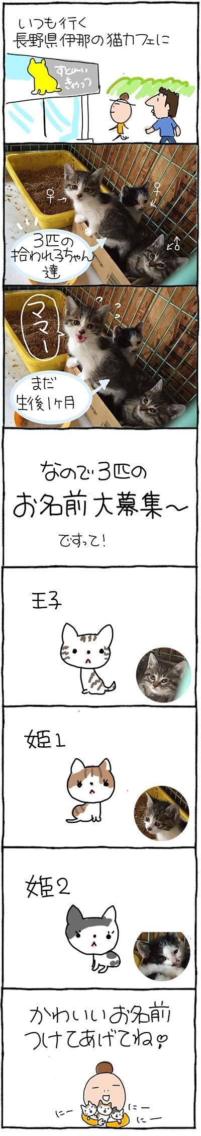 170605猫