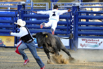 blog 47 Manu Lataste, Bull Jumper_DSC8088-4.29.17.(2).jpg